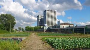 Uit je eigen stad, voedseltuinen foto: M. Nefs
