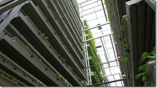 Vertical farming in Nederland: de stand van zaken