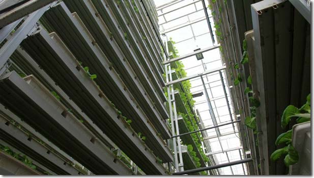 Vertical Farm Sky Grrens, SIngapore ( bron: permaculturenews.org)