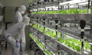 Fujitsu vertical farm ( foto: Fujitsu)